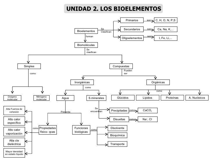 Bioelementos I, Fe, Li,... Ca, Na, K,... C, H, O, N, P,S Oligoelementos Secundarios Primarios Se Clasifican son son son Bi...