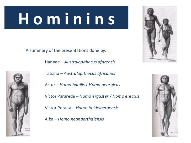 H o m i n i n s <ul><li>A summary of the presentations done by: </li></ul><ul><ul><ul><li>Hannae –  Australopithecus   afa...
