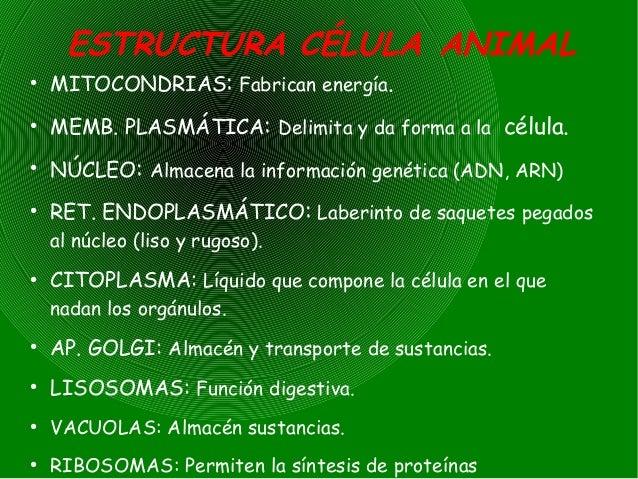 Resumen la celula - Informacion sobre la fibra vegetal ...