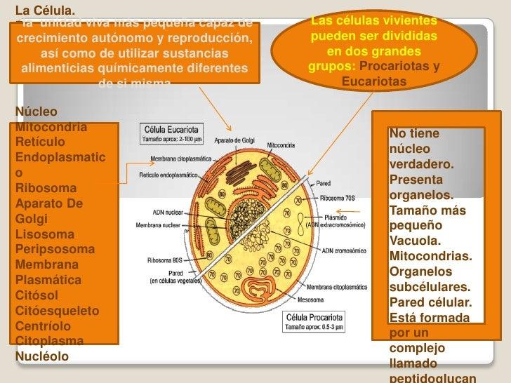 Resumen_La Célula Anatomia I