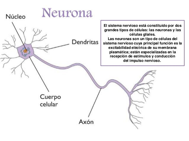 Neurona Resumen