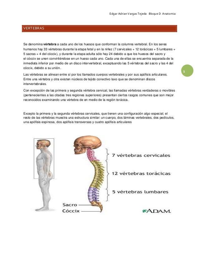 Resumen vertebras