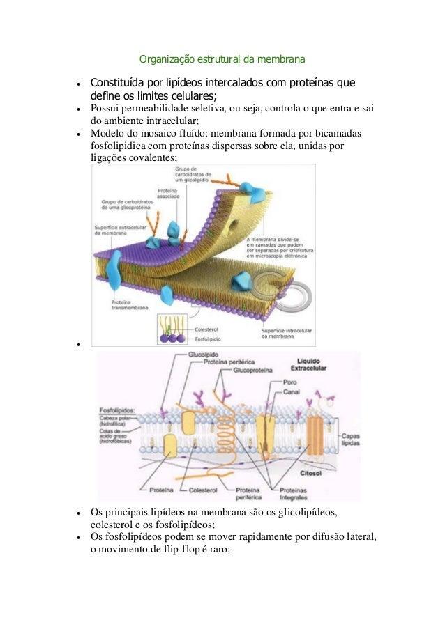 Organização estrutural da membrana   Constituída por lipídeos intercalados com proteínas que    define os limites celular...