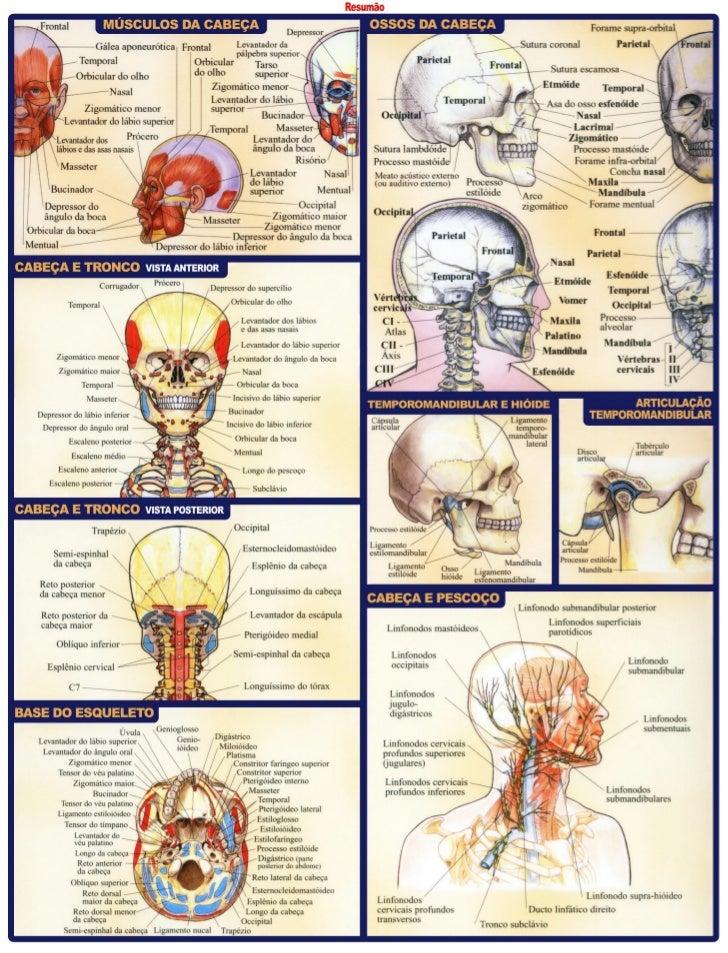 Resumo anatomia dentaria: odontostation@gmail.com Slide 2