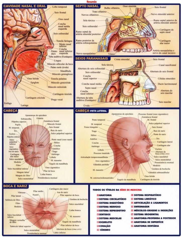 Resumo anatomia dentaria: odontostation@gmail.com Slide 3