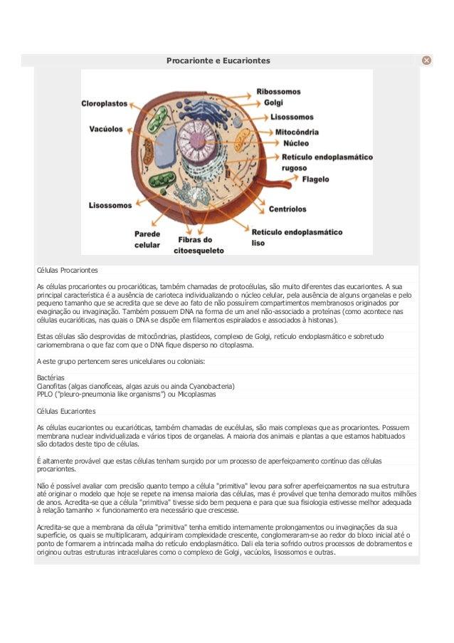 Procarionte e Eucariontes Células Procariontes As células procariontes ou procarióticas, também chamadas de protocélulas, ...