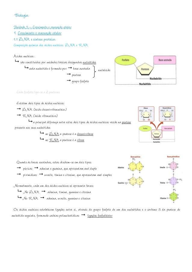 Biologia: Unidade 5 – Crescimento e renovação celular 1. Crescimento e renovação celular 1.1 DNA e síntese proteica: Compo...
