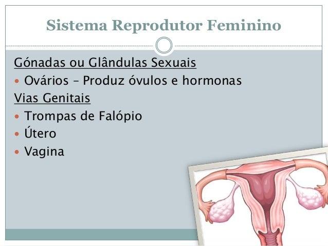 Sistema Reprodutor Feminino Gónadas ou Glândulas Sexuais  Ovários – Produz óvulos e hormonas Vias Genitais  Trompas de F...