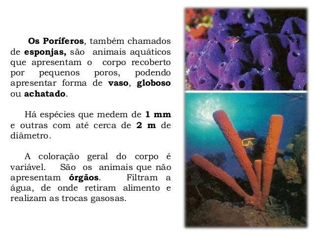 Os Poríferos, também chamados de esponjas, são animais aquáticos que apresentam o corpo recoberto por pequenos poros, pode...