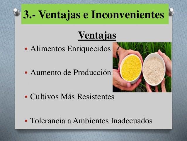 Cultivos transg nicos - Ventajas alimentos transgenicos ...