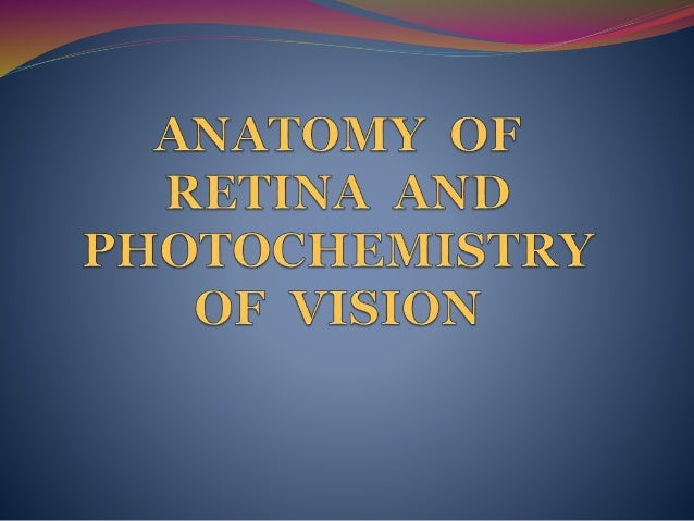 Retina physiology