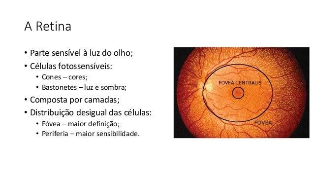 A Retina • Parte sensível à luz do olho; • Células fotossensíveis: • Cones – cores; • Bastonetes – luz e sombra; • Compost...