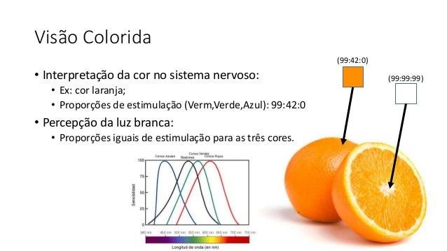 Visão Colorida • Interpretação da cor no sistema nervoso: • Ex: cor laranja; • Proporções de estimulação (Verm,Verde,Azul)...