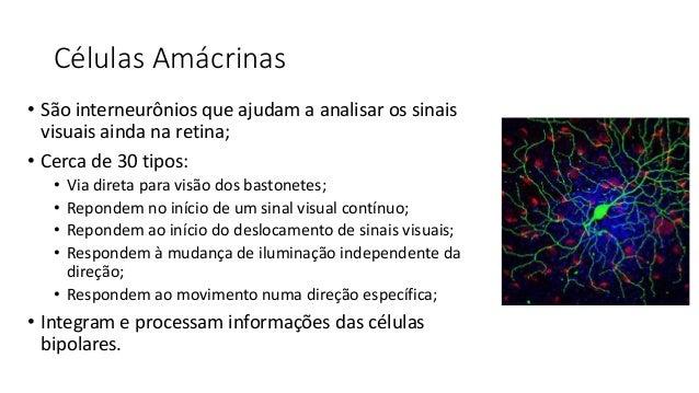 Células Ganglionares • Na retina há cerca de: • 100 milhões de bastonetes; • 3 milhões de cones; • Porém, há apenas 1,6 mi...