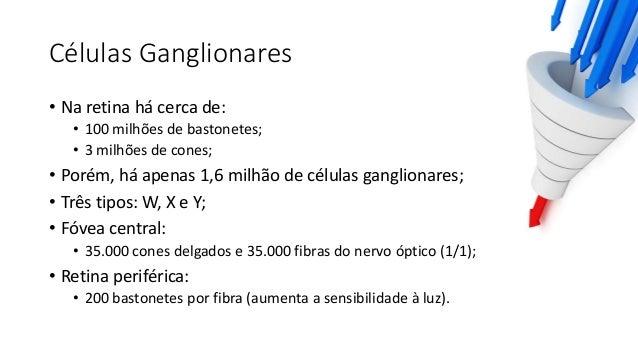 Células W • 40% das células ganglionares; • Células pequenas: 10µm; • Transmissão lenta: 8m/s; • Maior parte da excitação ...
