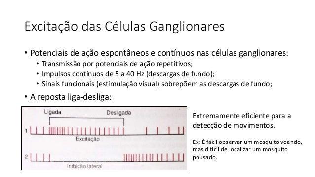 Transmissão de Sinais Coloridos • Se uma fibra recebe informação de um tipo de cone: • irá transmitir a informação daquela...