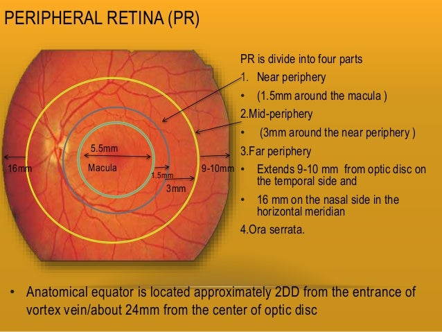 Retina And Layers