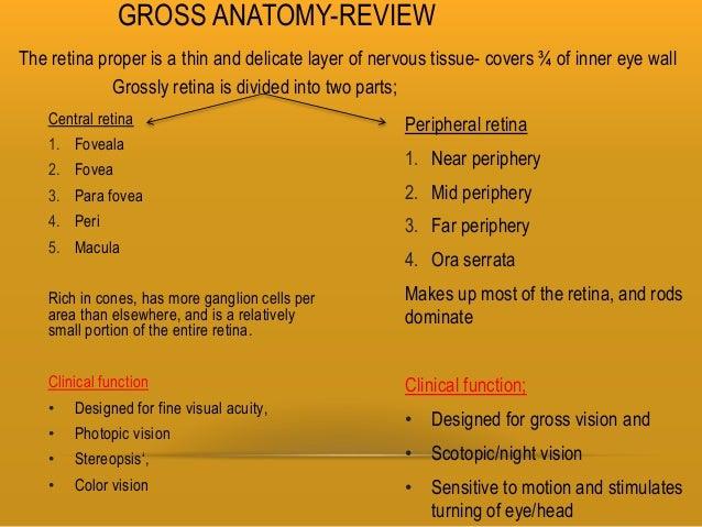 Retina and layers
