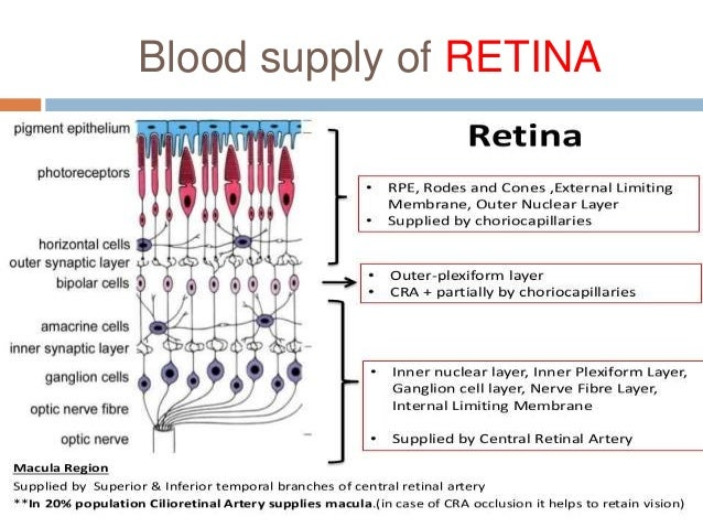 RETINAL BLOOD SUPPLY EBOOK DOWNLOAD
