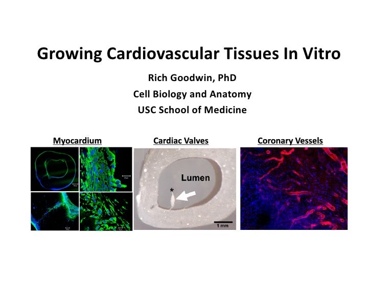 GrowingCardiovascularTissuesInVitro                RichGoodwin,PhD             CellBiologyandAnatomy          ...