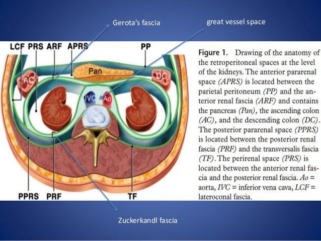 Retroperitoneal anatomy radiology