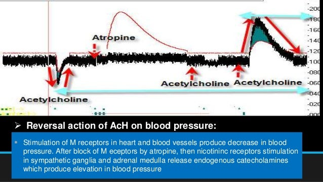Reversal Action Of Acetylcholine On Blood Pressure In Dog