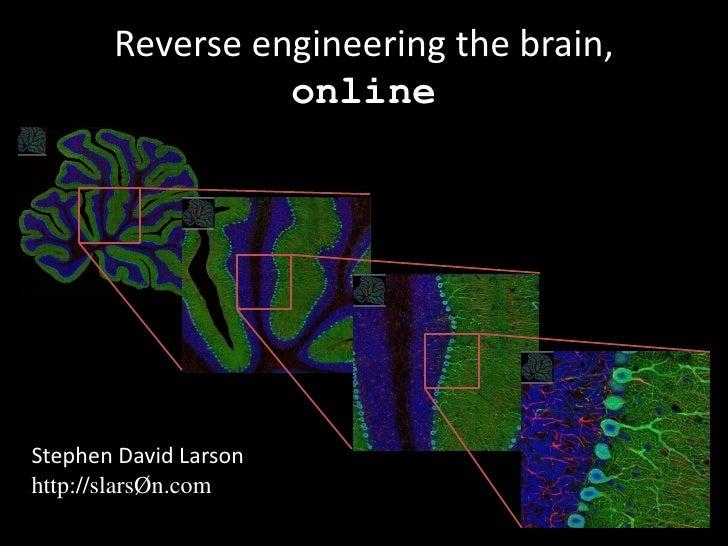 Reverse engineering the brain online ccuart Gallery