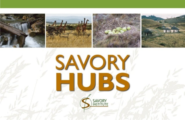 Savory Hubs: Making a significant global impact to address the most pressing problems of the Earth today – desertification...