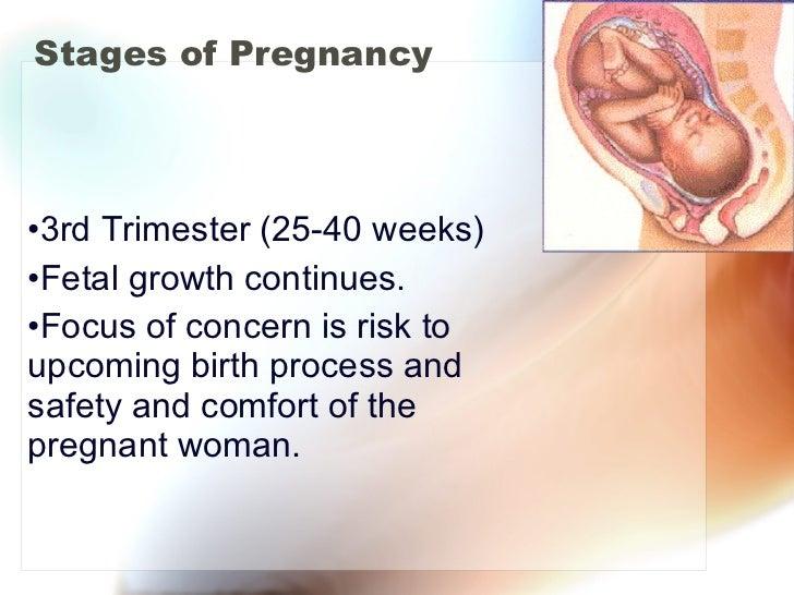 Stages of Pregnancy <ul><li>3rd Trimester (25-40 weeks) </li></ul><ul><li>Fetal growth continues. </li></ul><ul><li>Focus ...