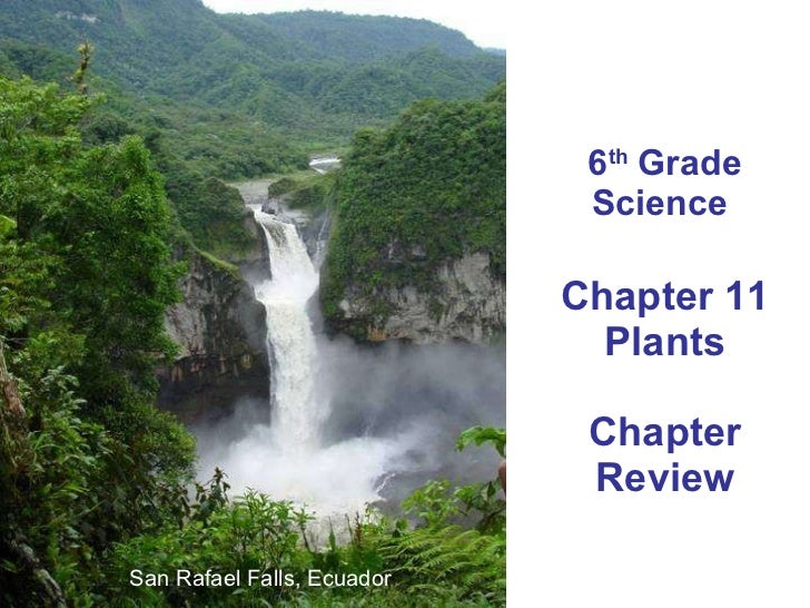 6 th  Grade Science  Chapter 11 Plants Chapter Review San Rafael Falls, Ecuador