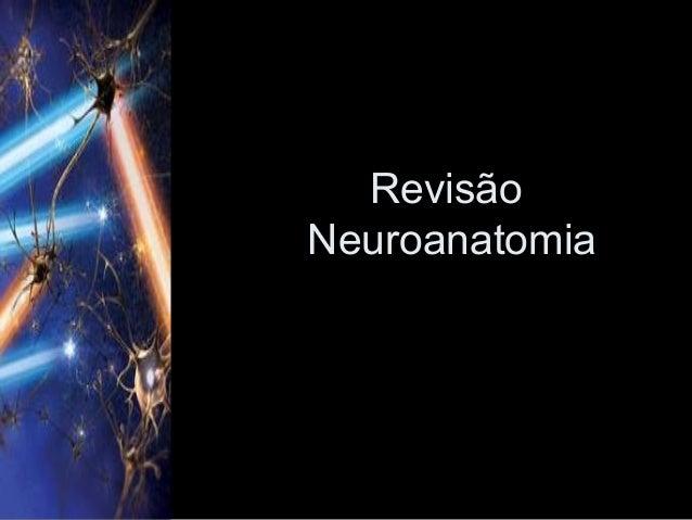 RevisãoNeuroanatomia