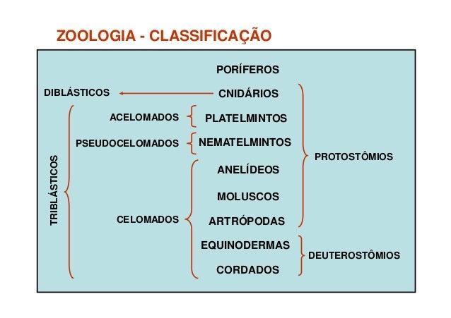 Revisao zoologia Slide 2