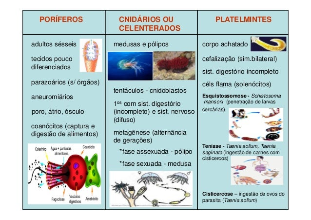 Revisao zoologia Slide 3