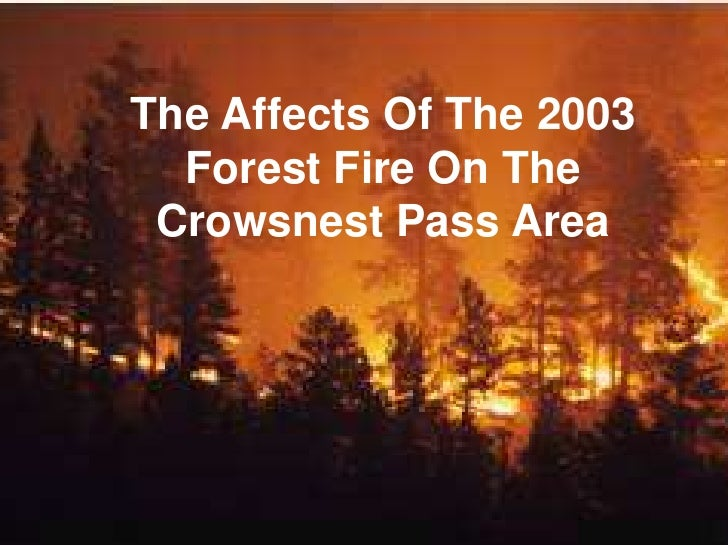The Affects Of The 2003 Forest Fire On The Crowsnest Pass Area<br />