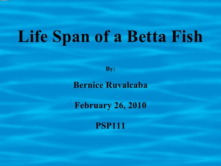 Life Span of a Betta Fish By: Bernice Ruvalcaba February 26, 2010 PSP111