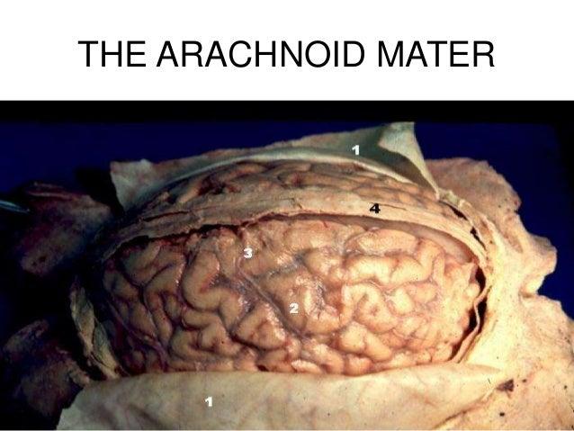 Revision of neuroanatomy