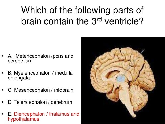 Revision of neuroanatomy