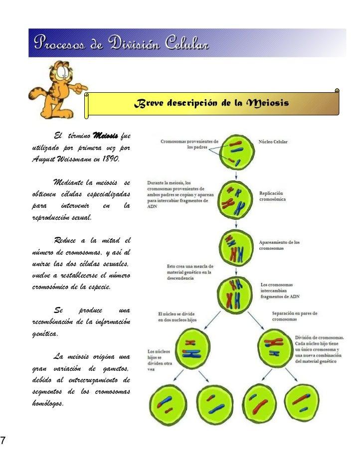 Procesos de Divisin Celular