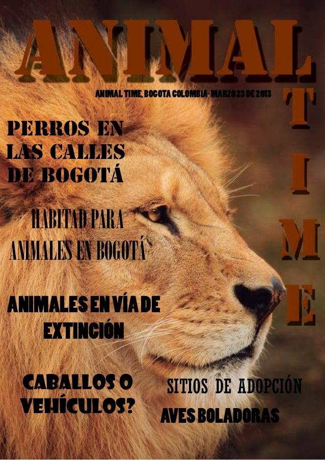 ANIMAL TIME              ANIMAL TIME, BOGOTA COLOMBIA- MARZO 23 DE 2013PERROS ENLAS CALLESDE BOGOTÁ   HABITAD PARAANIMALES...
