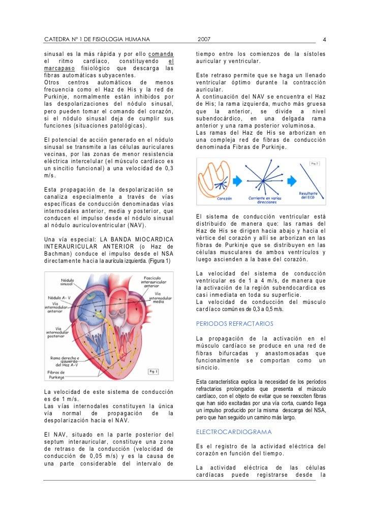 Guia de estudio cardio respiratorio