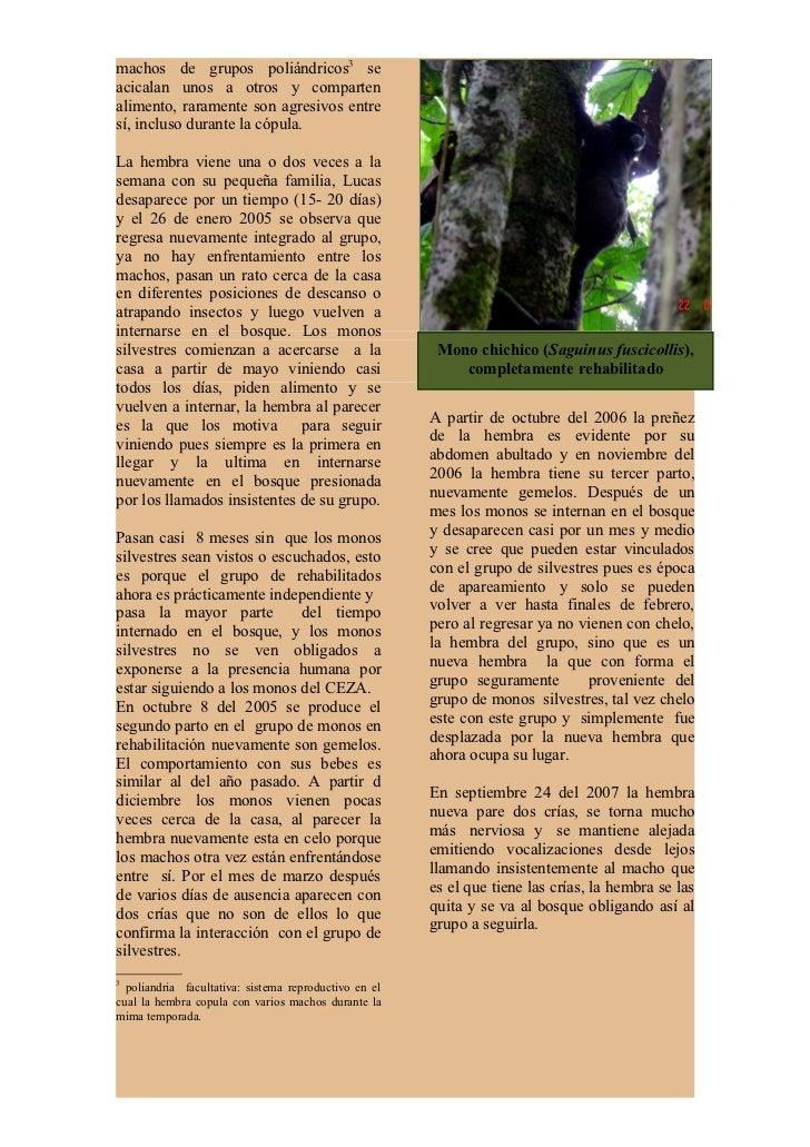 Así transcurre la vida deestos monos, unas vecesinternados en el bosque,completamenteautosuficientes;      otras,cerca del...