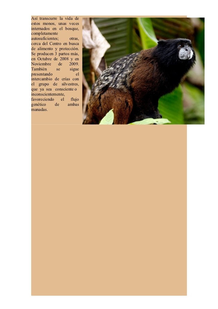 Foto Goran Sarafek   Diagrama De Flujo Genético En La Manada De Monos Chichicos (Saguinus fuscicollis     CHELO Ingreso: J...