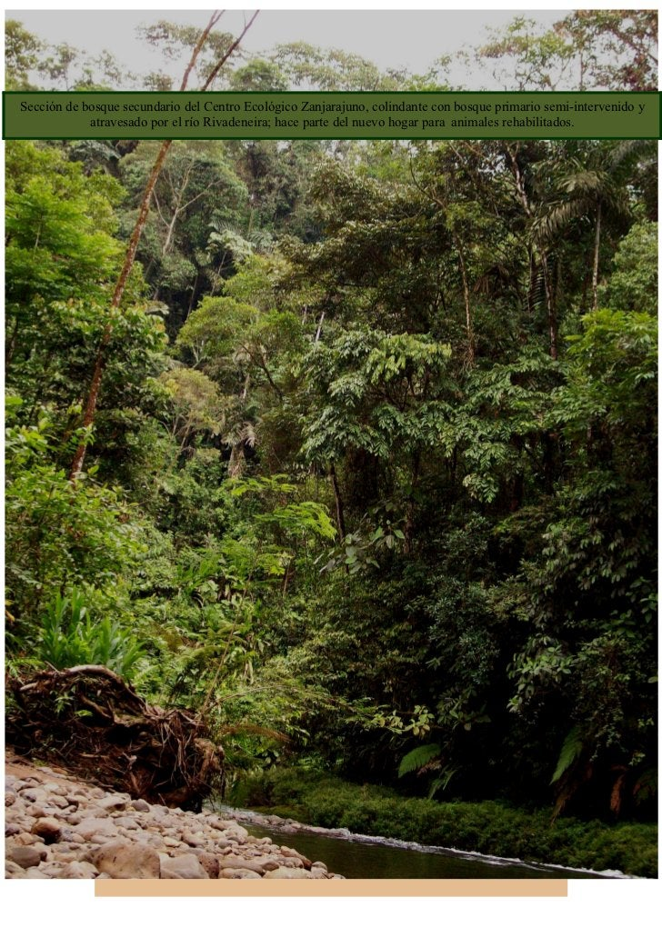 Sección de bosque secundario del Centro Ecológico Zanjarajuno, colindante con bosque primario semi-intervenido y          ...