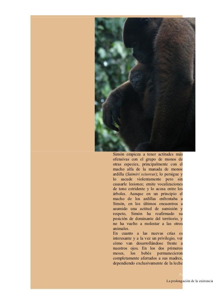 materna, casi tratando de ignorarel mundo que les rodea.    Diagrama De Flujo Genético En Monos Chorongos (Lagothrix lagot...