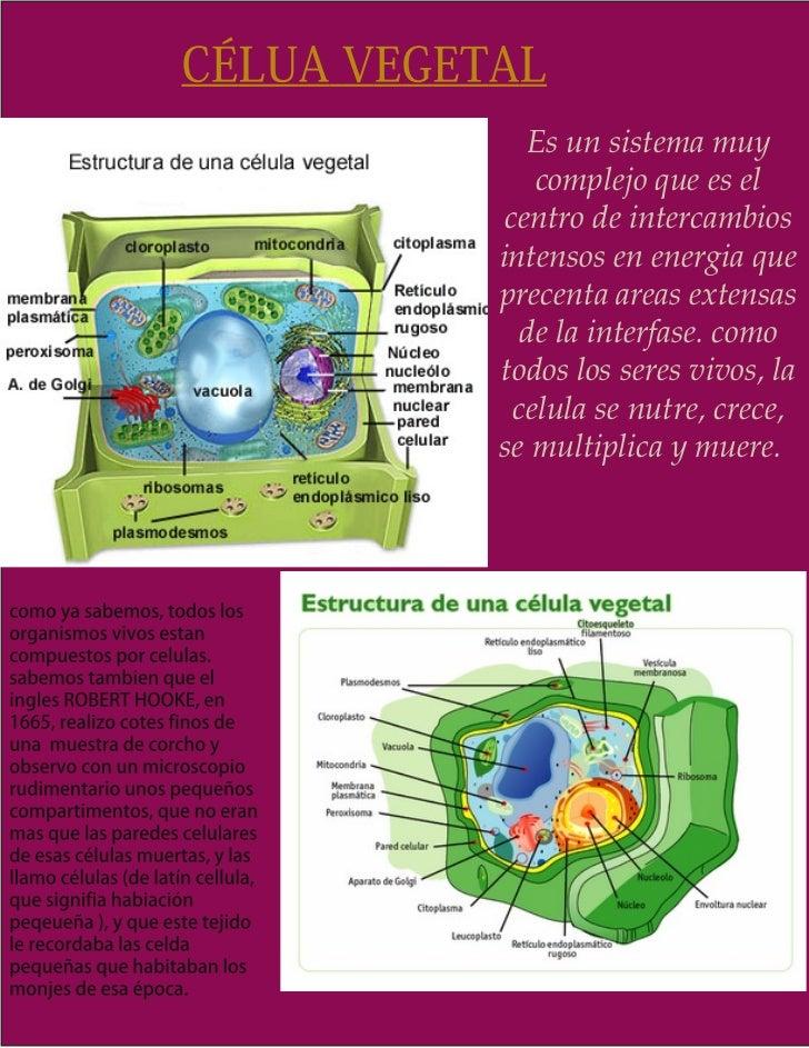 Es un sistema muy    complejo que es el centro de intercambiosintensos en energia queprecenta areas extensas   de la inter...