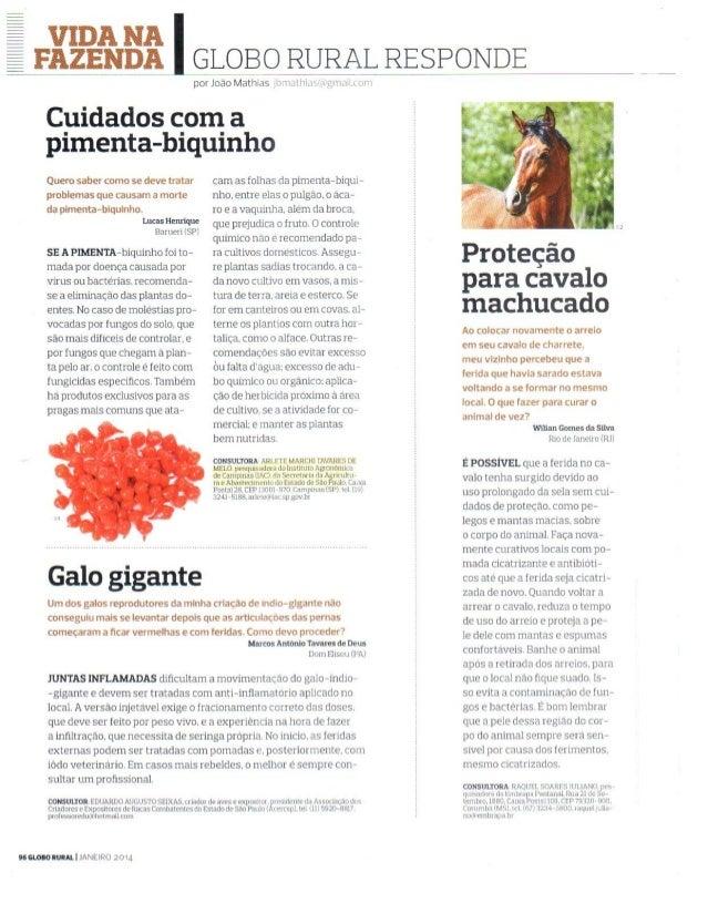 Revista Globo Rural - Pimenta
