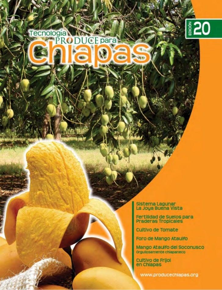 www.producechiapas.org                Eventos, Noticias, Revistas, Manuales, Exposiciones,                Congresos y Much...