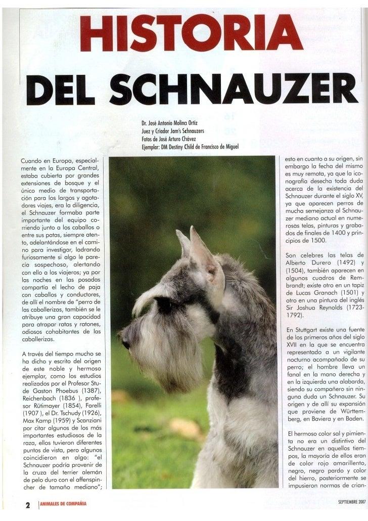 Revista Schnauzer