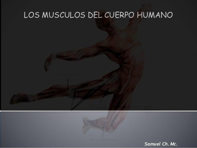 LOS MUSCULOS DEL CUERPO HUMANO  Samuel Ch. Mc.