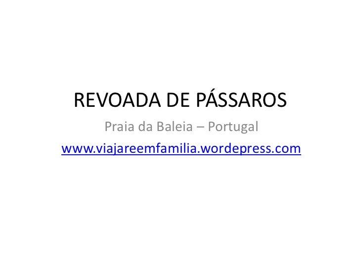 REVOADA DE PÁSSAROS     Praia da Baleia – Portugalwww.viajareemfamilia.wordepress.com